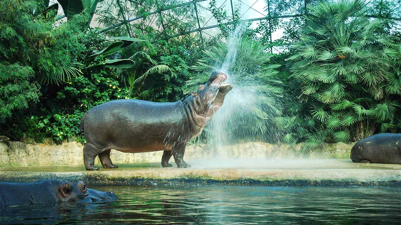 Zoologischer Garten Berlin Luxus Der Zoo Berlin Feiert Seinen 175 Geburtstag Berliner Akzente