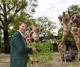 Zoologischer Garten Berlin Luxus Tierpark Berlin Geschichte