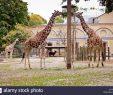 Zoologischer Garten Berlin Luxus Zoologischer Garten Berlin Stockfotos & Zoologischer Garten