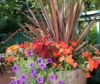 Container Garten Frisch Container Planting Color Fall Ideafall Color Container