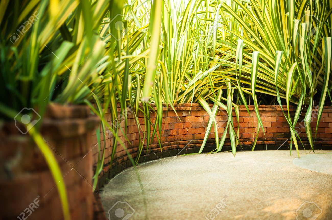 photo tropical garden with exotic plants