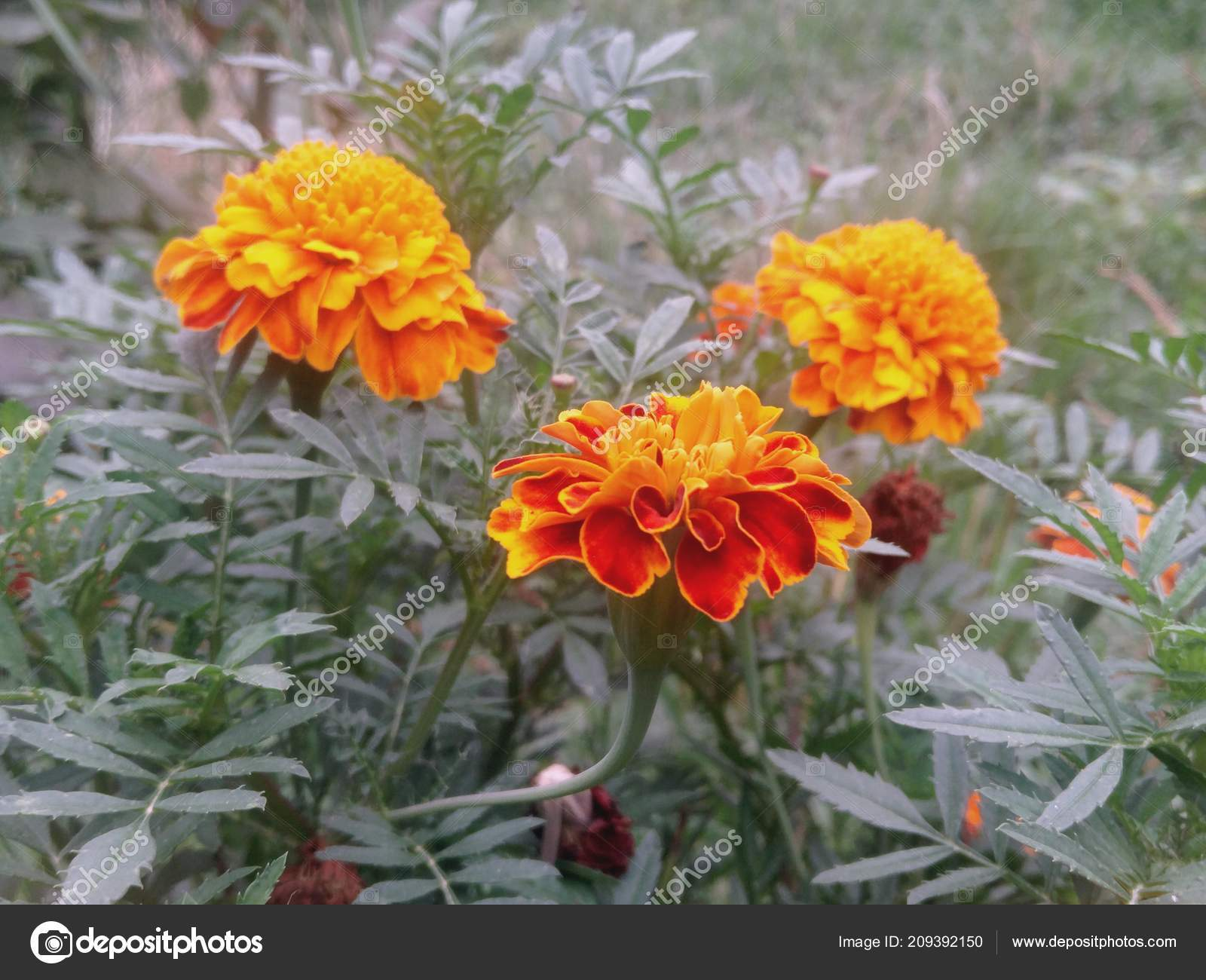 depositphotos stock photo summer garden flowers colorful flower