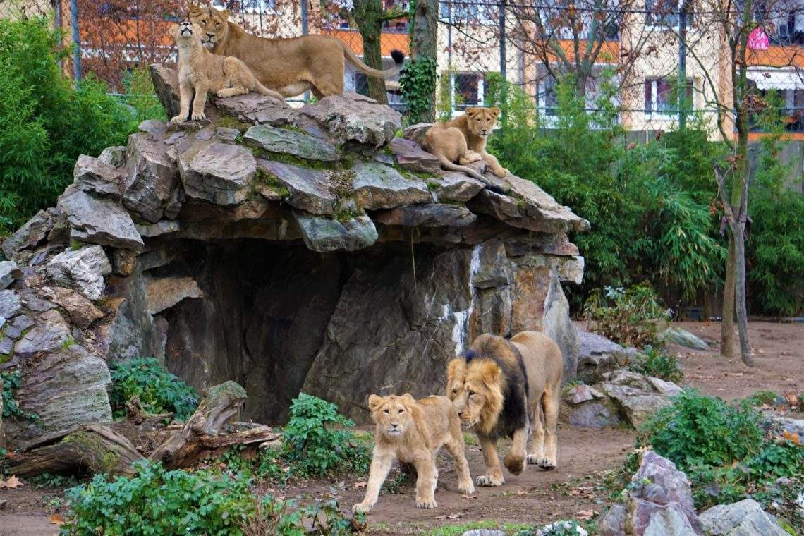 lowen frankfurt zoo 1140x760